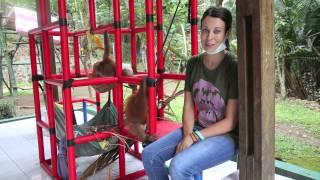 Saving the Habitat of the Sumatran Orangutan