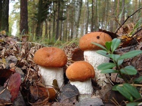 Как вырастает гриб за сутки.Часть 2,