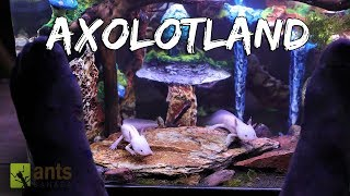 Axolotland - The Cutest Creatures You