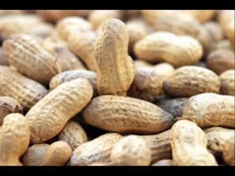 Peanut allergy 'cut by early exposure'.