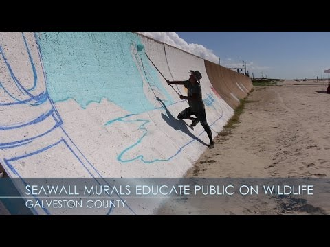 Seawall murals educate public on wildlife conservation