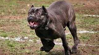 Никогда не заводите этих собак в квартире! Худшие породы собак для содержания в квартире...