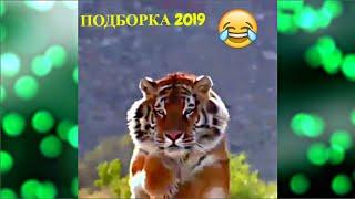ЛУЧШИЕ ПРИКОЛЫ/СМЕШНЫЕ ЖИВОТНЫЕ 2019 Funny Animals