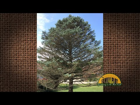 Q&A - What kind of tree is this? Most limbs are dying or dead. What can we do?