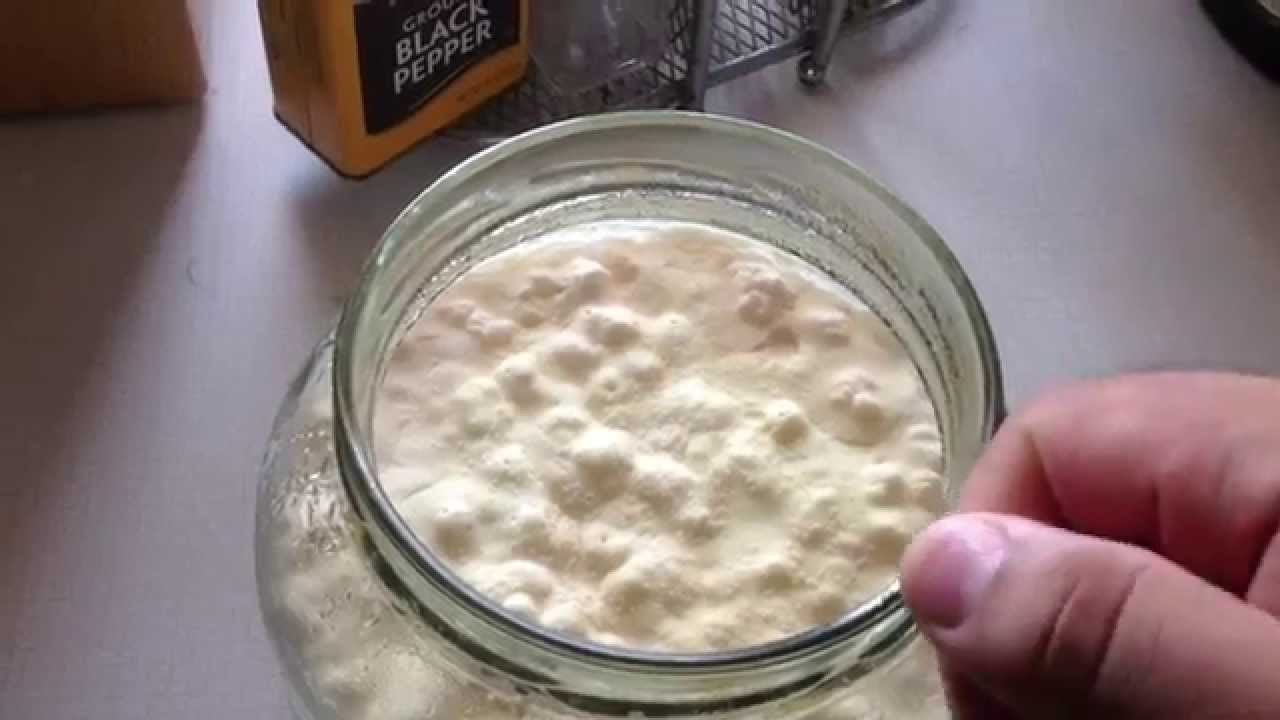 para que sirven bulgaros de leche