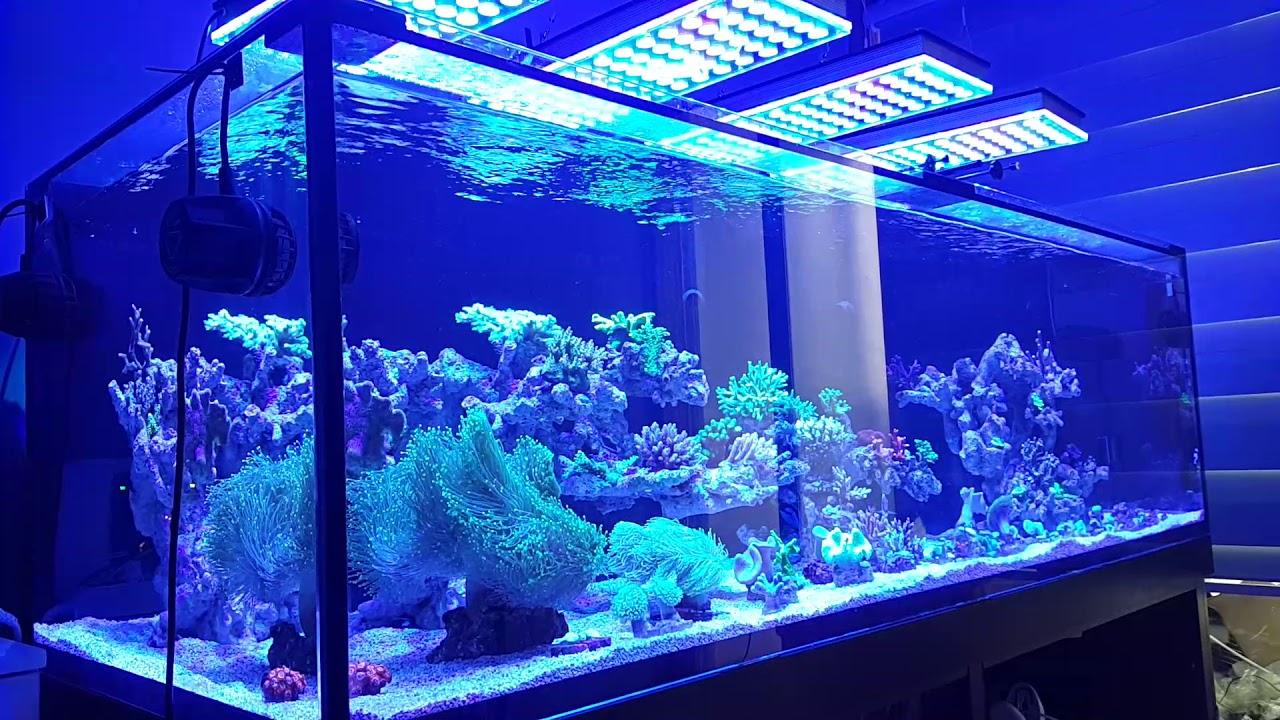 Best Reef Aquarium Led Lighting Orphek