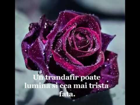 citate despre trandafiri Trandafiri   YouTube citate despre trandafiri