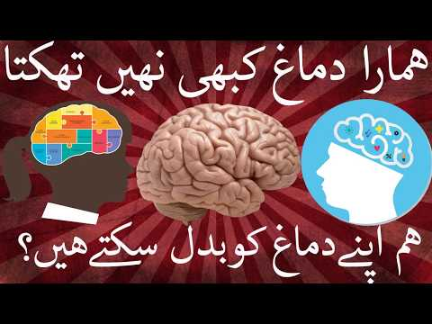 10 Facts About Brain Work Which Prove We're Capable of Anything   Urdu&Hindi