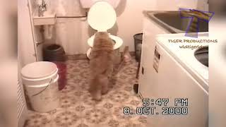 The best and funniest CAT moments   Funny cat compilation