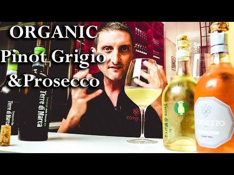 Organic Pinot Grigio & Proseccos - Tasty Italians By Corvezzo