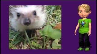 Ёж обыкновенный О животных детям