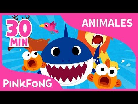 Mejores Canciones De Animales | Tiburón Bebé Y 17 Canciones Más | +Recopilación | Pinkfong