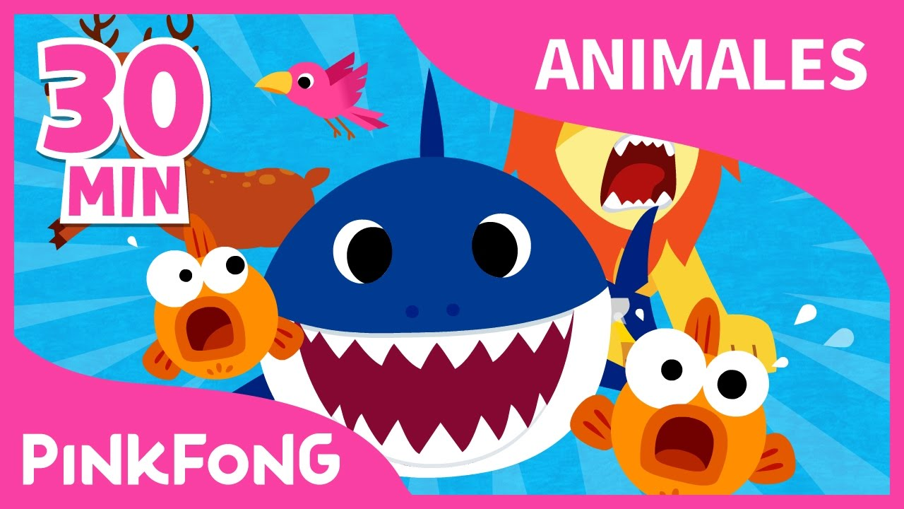 Mejores Canciones De Animales Tiburon Bebe Y 19 Recopilacion