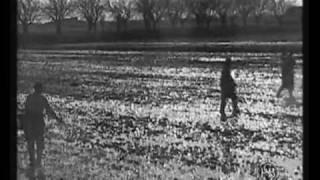 Bentivoglio (Bologna) - 1940 - Attività di sistemazione dei campi a risaia