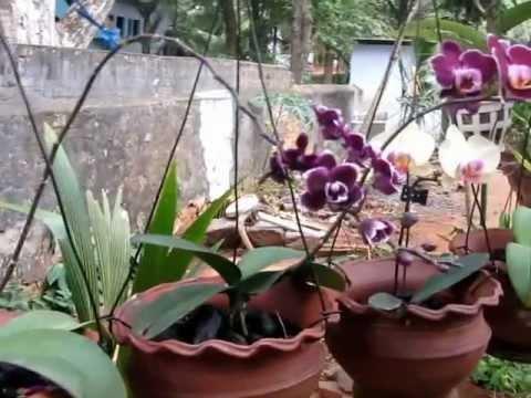 My Orchid Garden