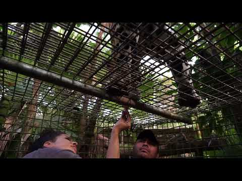 The Belize Zoo 2017 - THE CHEAP NOMAD