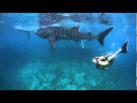 Hannah Mermaid swims with Whale Sharks