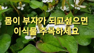 어성초의 기막힌 효능 20/232회