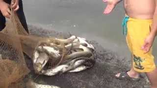 видео Строительство водоема для разведения рыбы