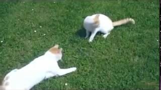 Веселые и смешные коты с нами топ2017 #1