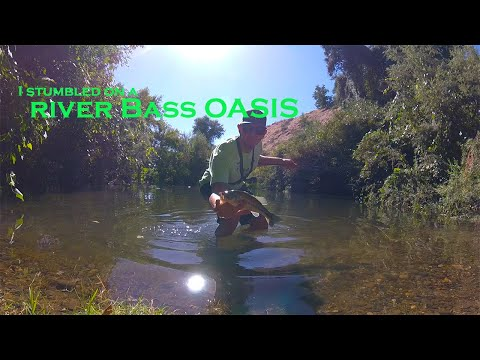 I Stumbled On A River Bass OASIS | Tuolumne River Bass Fishing