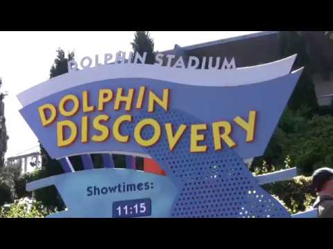 Amazing Dolphin Dance Show | Discovery |||  Show at Sea World