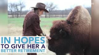 Woman Puts Potty-Trained Bison Up For Sale on Craigslist