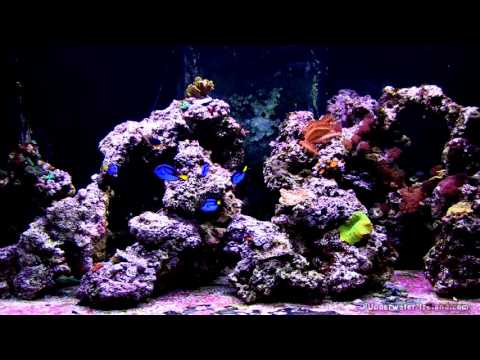 Relaxation: Salt water sea coral reef fish tank aquarium in Petstop. 1 hour full HD.