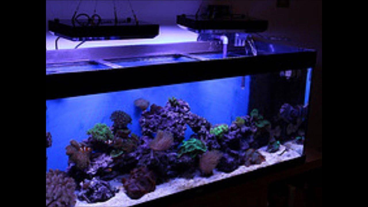 www.ramon-b.nl -aquarium led verlichting.wmv - YouTube