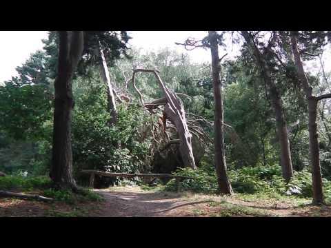 Highgate  Hampstead - Kenwood - Golders Hill Park-Highgate Cemetery-London jog