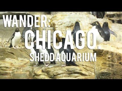 WANDER: CHICAGO   Shedd Aquarium