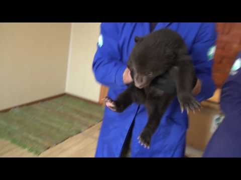 NEW Rescued Bear Cubs at IFAW OBRC