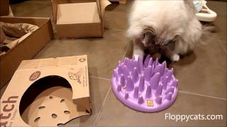 Ragdoll Cats Receive Northmate Catch Feeder for Cats - Interactive Feeder for Cats - Floppycats
