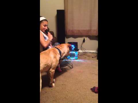 Funny dog with karaoke