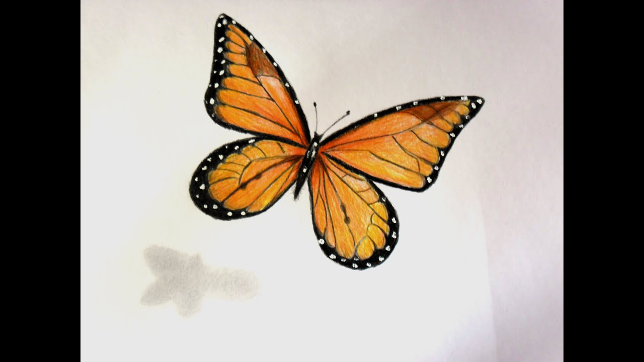 Realistic monarch butterfly drawing the for How to make a butterfly drawing
