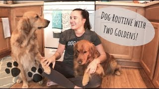 EVERYTHING YOU NEED TO KNOW ABOUT OWNING GOLDEN RETRIEVERS | DOG ROUTINE