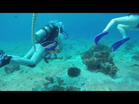 Beginner Scuba - Cozumel, Mexico: Carnival Cruise Line Excursions