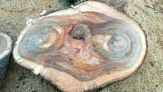 E Tree! Amazing Image Of Movie Alien Found In A Tree Stump By Hotel Owner Chopping Firewood
