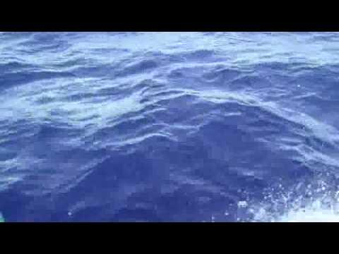 delfines en el canal de la Mona