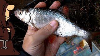 Рыбалка Первомайская 2021 порыбачили на донки с берега Плотва Пескарь и красивые места на реке