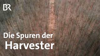Harvester Holzerntemaschinen setzen Wald unter Druck  Zwischen Spessart und Karwendel  Doku  BR