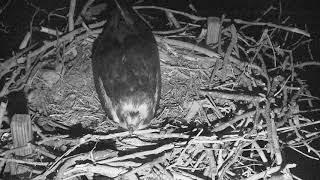 Osprey Nest - Chesapeake Conservancy Cam 05-23-2018 21:25:44 - 22:25:45 thumbnail