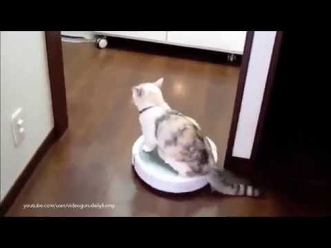 Cats on Roombas: BEST Compilation