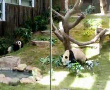 Panda An An and Jia Jia