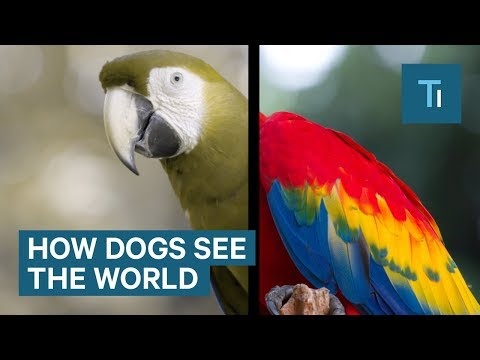 How Dogs See The World And It S More