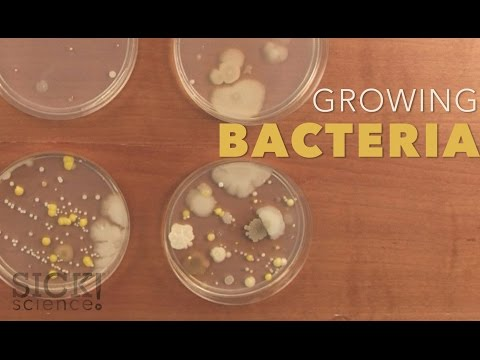 Growing Bacteria Sick Science 210 Safe Videos For Kids