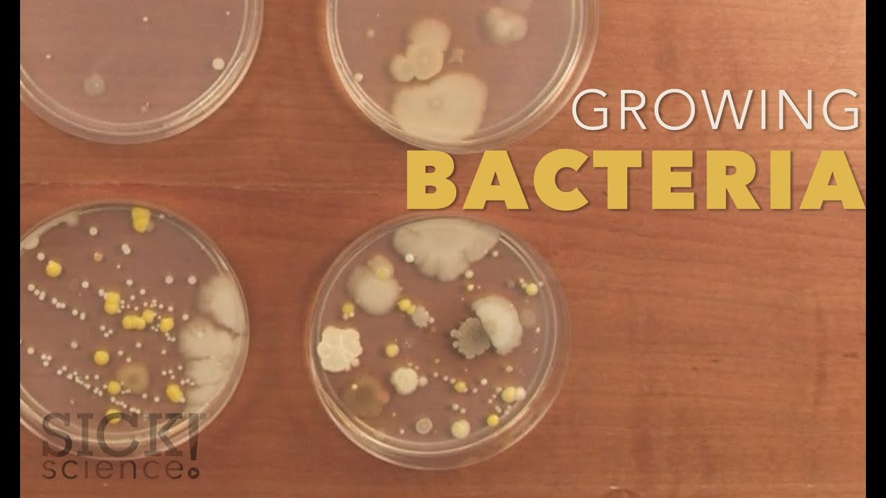Growing Bacteria In Petri Dishes Experiments Steve Spangler Science