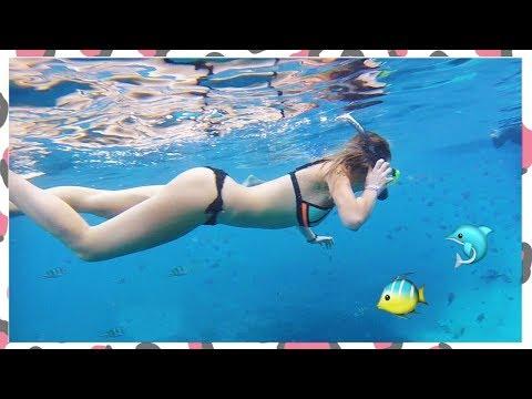 Zwemmen met WILDE DOLFIJNEN in Egypte