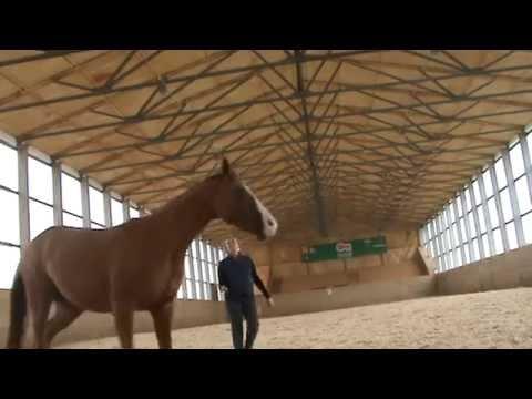 Игры с лошадью
