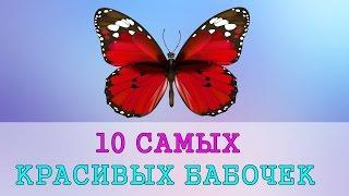 10 самых красивых бабочек